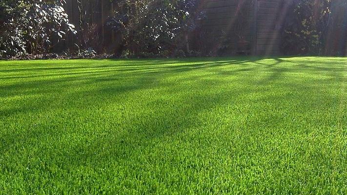 Gazon traiter la maladie du fil rouge jardinews - Chaux pour gazon ...