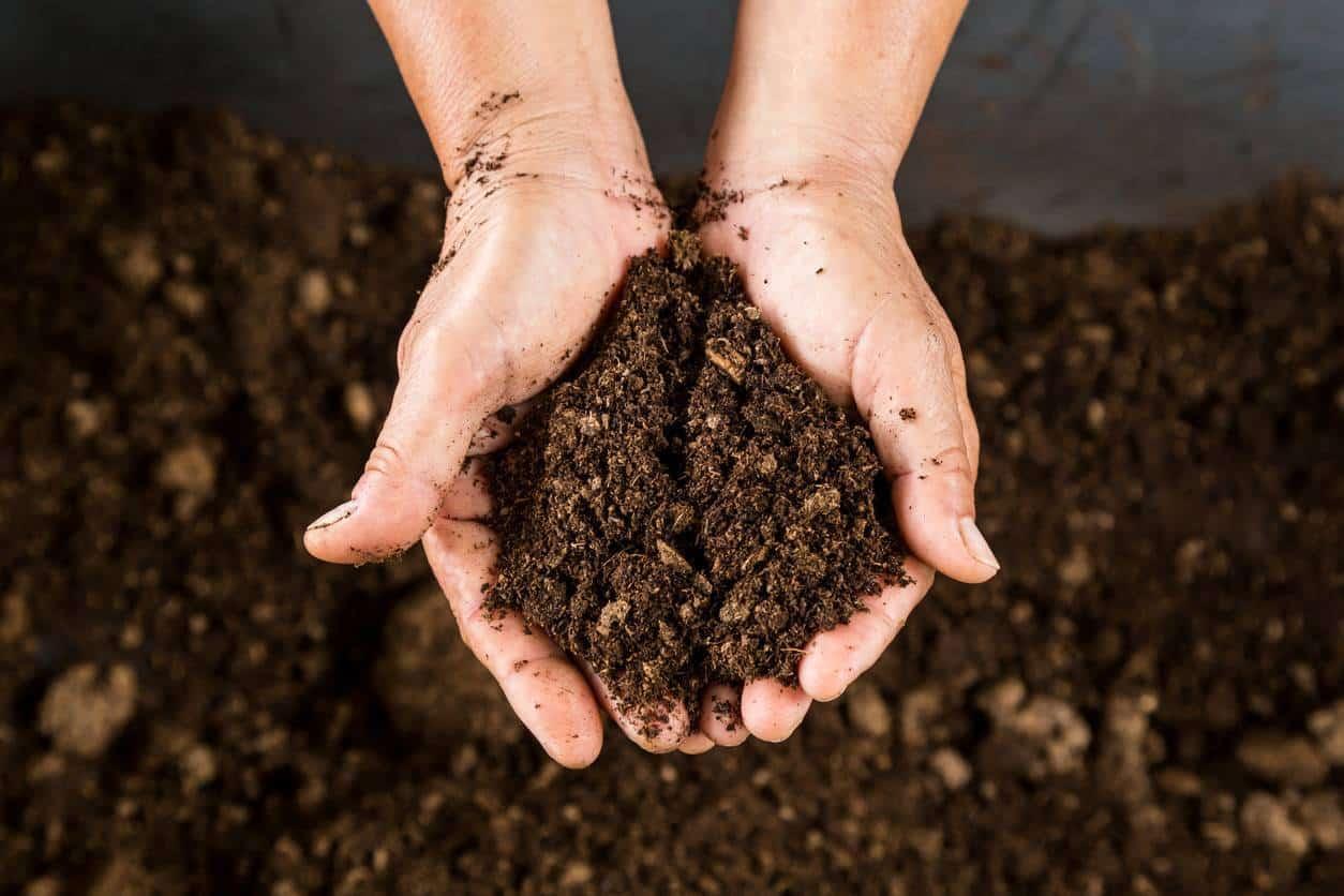 compost jardin écologie