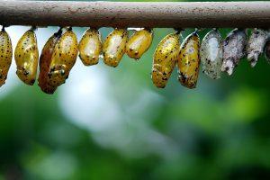 Pourquoi utiliser les larves de coccinelles pour la lutte biologique ?