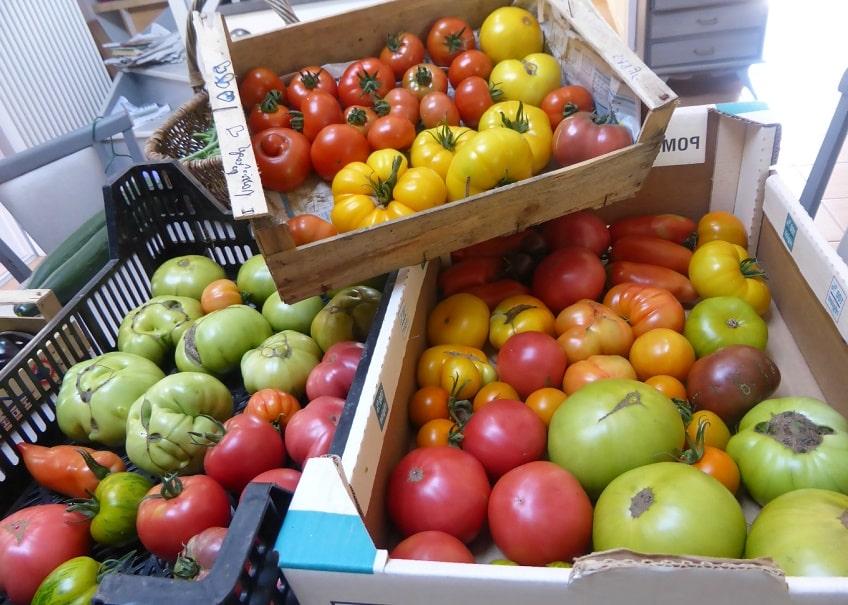 quelles sont les meilleures vari t s de tomates jardinews. Black Bedroom Furniture Sets. Home Design Ideas