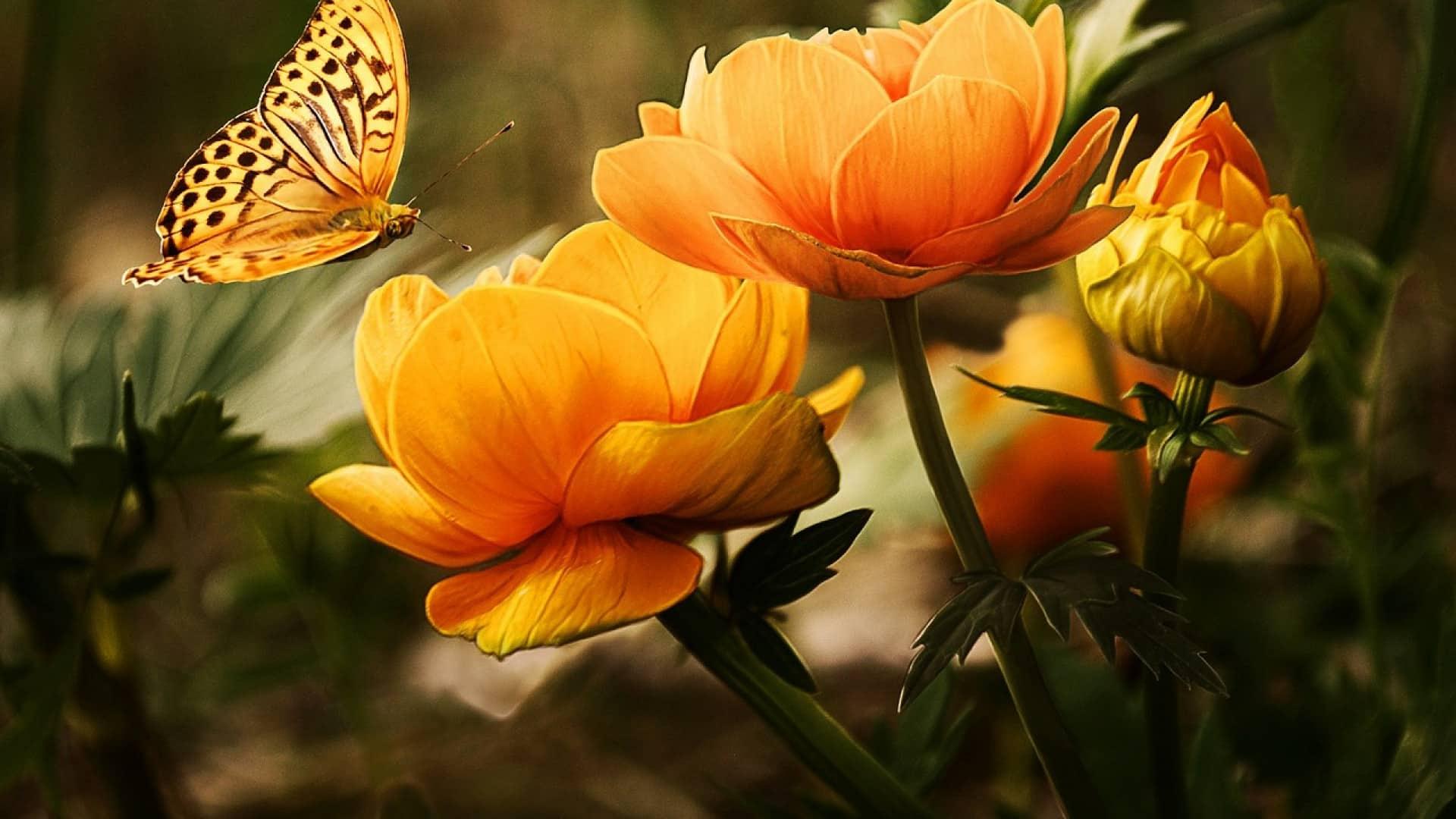 Tout ce dont vous avez besoin pour embellir votre jardin !